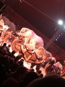 Cirkusz 2018.